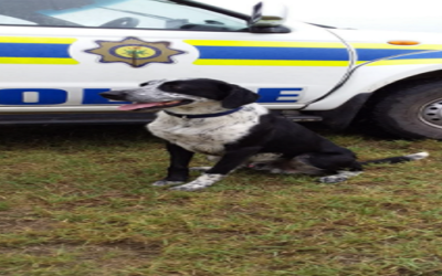 Makhanda K9 puppy hailed for netting his greatest success yet
