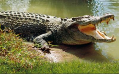 Makhonyeni community living in fear following crocodile sightings